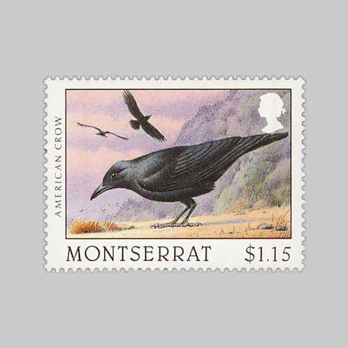Crows:-Messenger-of-the-Gods