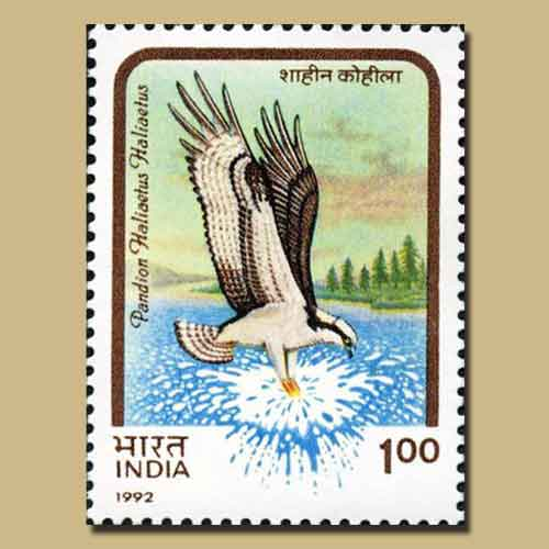 Birds-of-Prey-Error-Stamp-of-India