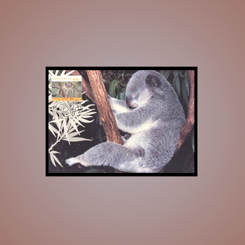 One-cannot-lose-sight-when-Koala-is-on-a-stamp