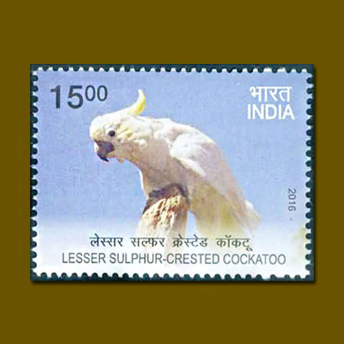 Lesser-Sulphur-crested-cockatoo