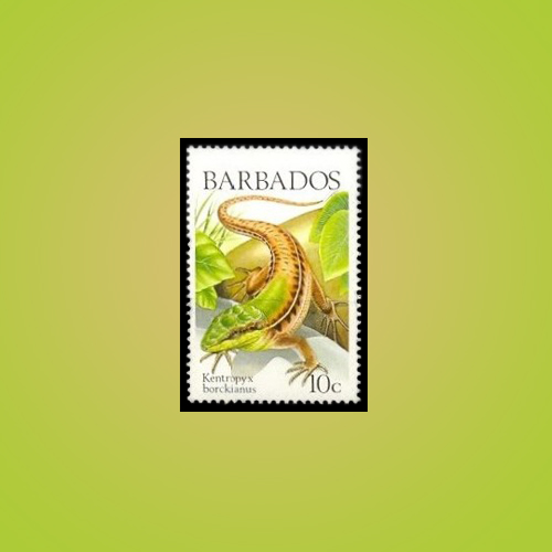 Lizards-of-the-Barbados-Island