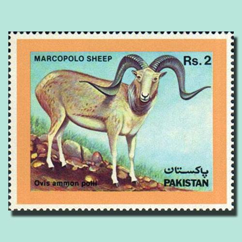 Marcopolo-Sheep