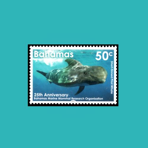 Marine-Mammal-in-Bahamas-Water