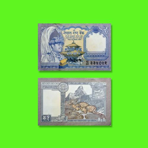 Musk-Deer-on-Nepal-Banknotes