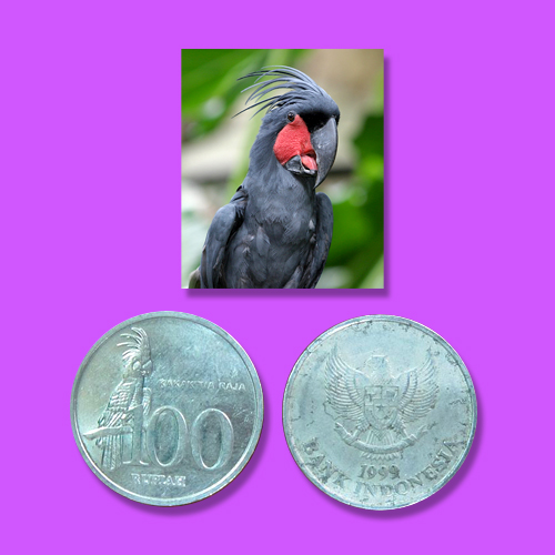Palm-Cockatoo-on-100-rupiah-coin-of-Indonesia