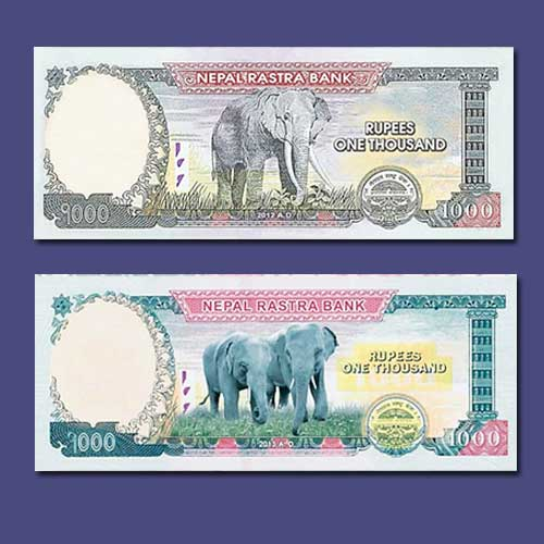 Twin-Asian-Elephants-on-Nepal's-New-BankNote