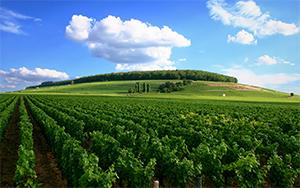 Visiting French Vineyards