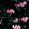 printedwildflower