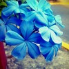 basicc_blue