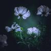 wind_flower