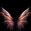angel1111