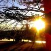 cohen_tree