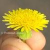 prathmeshshinde_