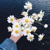_daisy_