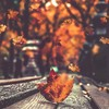 an_unspoken_leaf