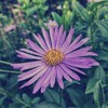 aster_not