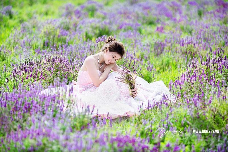 Đến Bà Rịa thăm vườn hoa tím đẹp ngỡ trời Âu