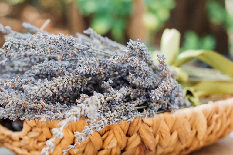 Muốn mua Lavender tại TP.HCM, hãy ghé các shop hoa khô này