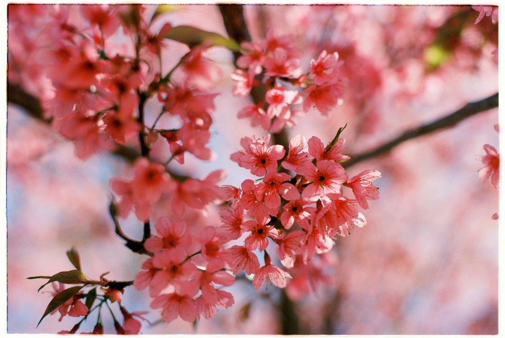"""Lạc lối vào thiên đường """"Đà Lạt – 12 mùa hoa"""" (Phần 1)"""
