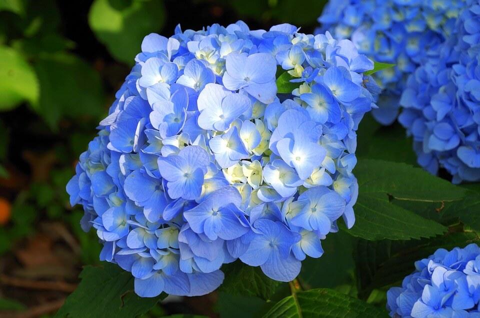 Đắm mình với thiên đường hoa ở Đà Lạt quanh năm (Phần 2)