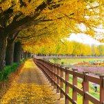 Du lịch Hàn Quốc chụp ảnh tình yêu