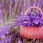 6 loài hoa kì diệu thường được dùng điều chế mỹ phẩm