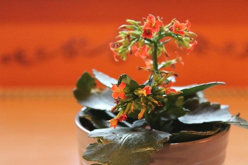 Năm mới, nên trồng cây này để có thể rước tài lộc vào nhà