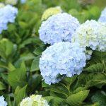 flower-2095435_1280