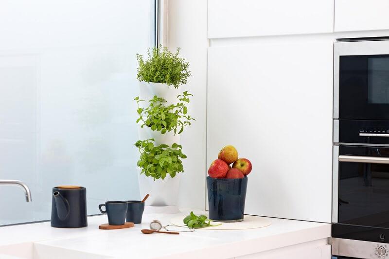 Cách trồng cây tô điểm cho nhà có diện tích hẹp