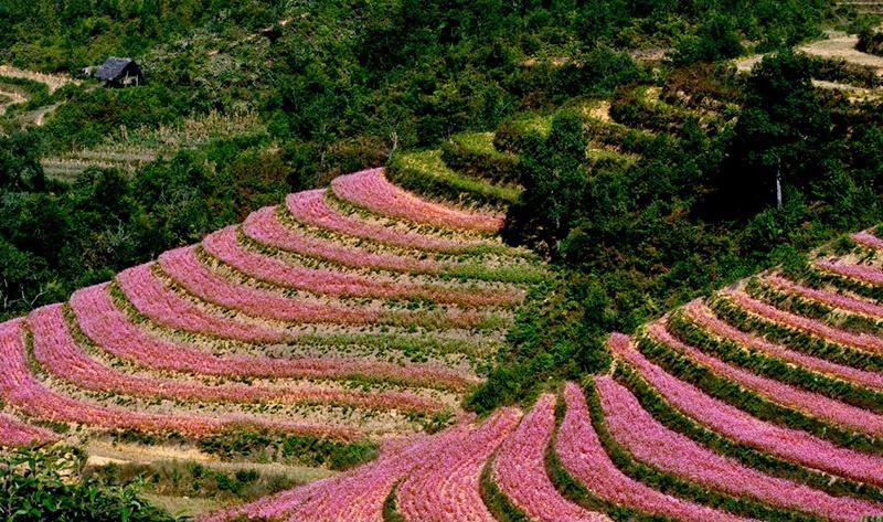 Những địa điểm nhất định phải check-in khi du lịch Hà Giang