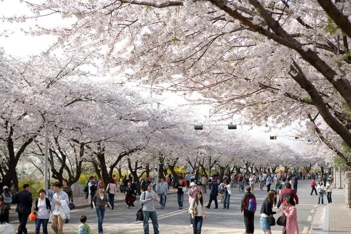"""5 điểm đến giúp bạn du lịch """"trọn vẹn"""" Seoul trong 1 ngày"""