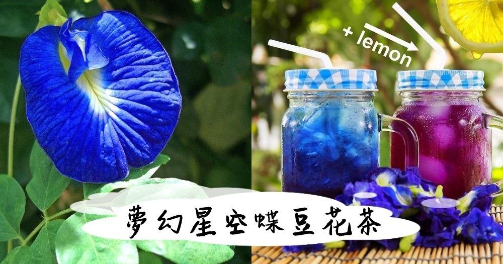 Săn lùng món trà sữa hoa đậu biếc khiến teen Sài Gòn mê mệt