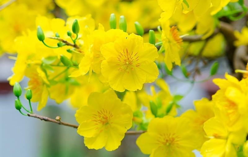 Ý nghĩa của những loài hoa quen thuộc chưng trong ngày Tết