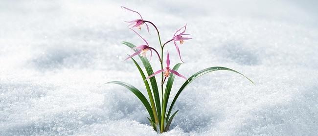 cham-soc-da-toan-dien-voi-innisfree-jeju-orchid-enriched-cream-2018-lucky-box-p2-2