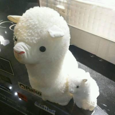 好得意! #cute #alpaca