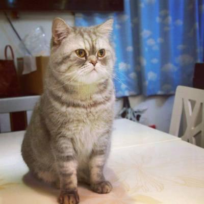 猫の日 (22/02) ,在樓上cafe中,發現皇牌貓店員! 毛色深淺相間,不時巡視業務,卻不會打擾進食。 更客串暖場,跟食客玩遊戲和被集郵。 貓奴之魂燃起了❤ / Review: 貓奴の體驗 http://piyoscolumn.blogspot.hk/2016/03/blog-post.html / #foodie #foodporn #pet #cat #kitty #neko #ねこ #猫の日 #kawaii #可愛い #萌物 #治癒 #貓奴 #cafe #尖沙咀 #happyland #相機食先 #吃貨 #PiyosColumn