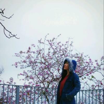 美景處處。何用遠走...  #香港美景 #宮粉洋蹄甲 #花期3月至5月 #留意返唔係洋紫荊 #洋紫荊係深紫紅色