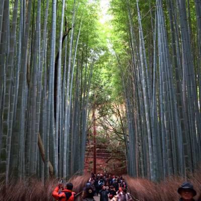 竹林。深處。人家? 這裏是嵐山的林小徑,蠻多人啦~~ 紅葉季真的沒法子  #嵐山 #竹林 #bamboo #green #natural #travel