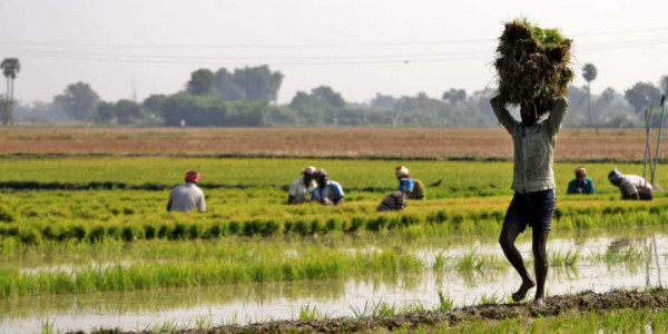 Odisha sends list of 30 lakh farmers for PM-Kisan scheme