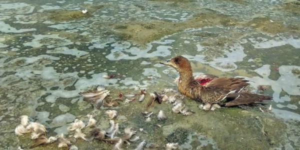 सांभर झील पर 15 दिन में 10 हजार पक्षियों की मौत, मुख्यमंत्री ने रेस्क्यू सेंटर खोलने के निर्देश दिए