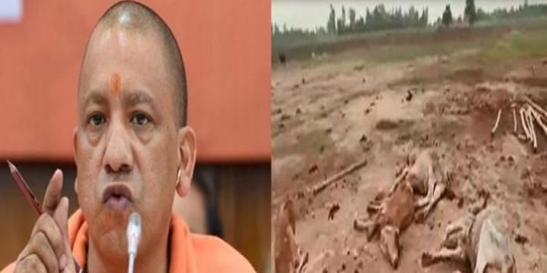 news-yogi-aditya-nath-suspends-8-officers-for-cow-deaths-in-uttar-pradesh-news-hindi
