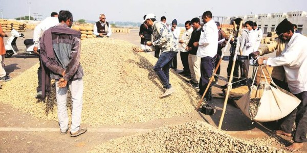 its-peanuts-for-gujarat-groundnut-farmers