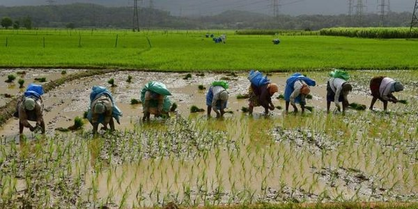 giving-farm-sector-a-push-and-tackling-burning-issues