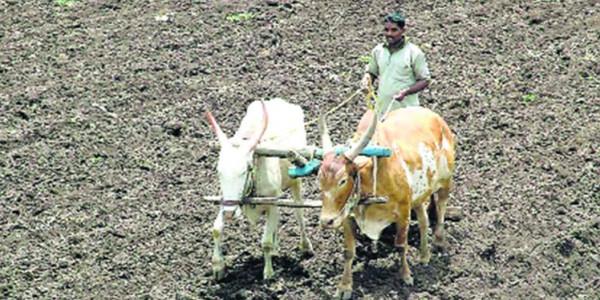Loan waiver: 40 lakh debt-ridden farmers can once again seek crop loans