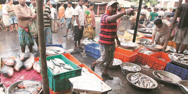 goa-fda-officer-alleges-harassment-by-govt-after-formalin-detection-in-fish