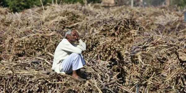 12,021 farmer suicides in Maharashtra in four years
