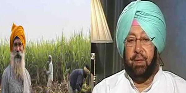 पंजाब सरकार ने गन्ना किसानों को दिया बड़ा तोहफा, 25 रुपये प्रति क्विंटल देगी सब्सिडी