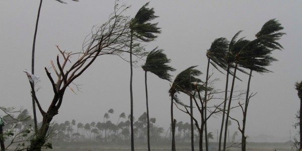 Restoring the Greens: Plantation Drive Follows Fani Destruction in Odisha
