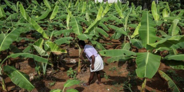 Sigh of relief for farmers in Kerala as State assembly passes new law