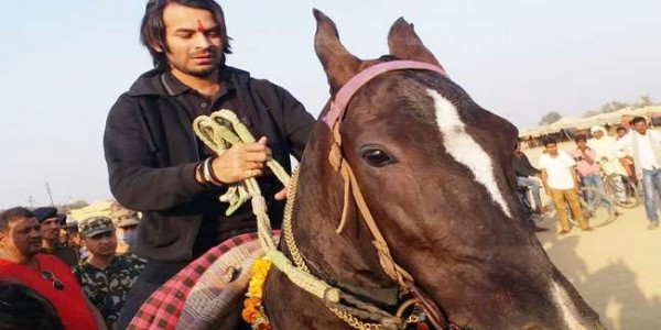tej-pratap-yadav-likes-the-horse-and-bought-80-thousand-know-the-matter